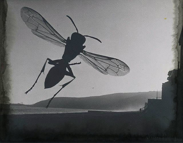 Man_Ray-Fly_and_Landscape
